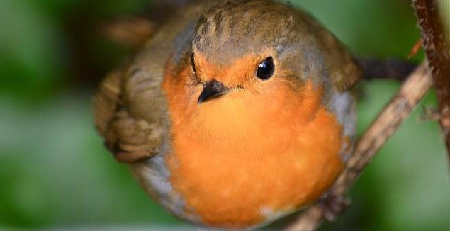 Elk vogeltje z'n eigen liedje…