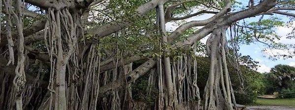 Een magische boom…